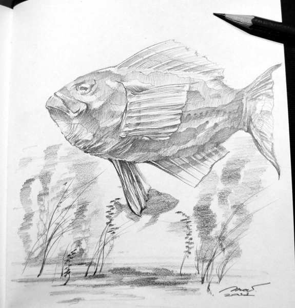 Sketch_Fish_201108.jpg